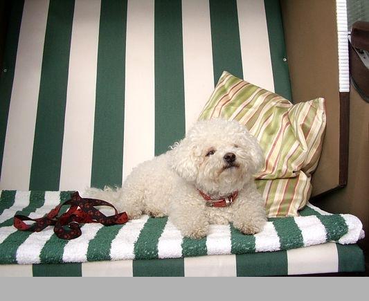 Emma im Strandkorb