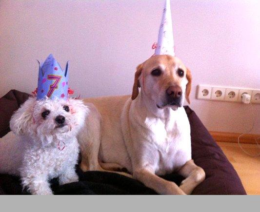 Geburtstage sind lustig!