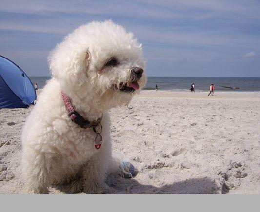 Ein schöner Tag am Strand!