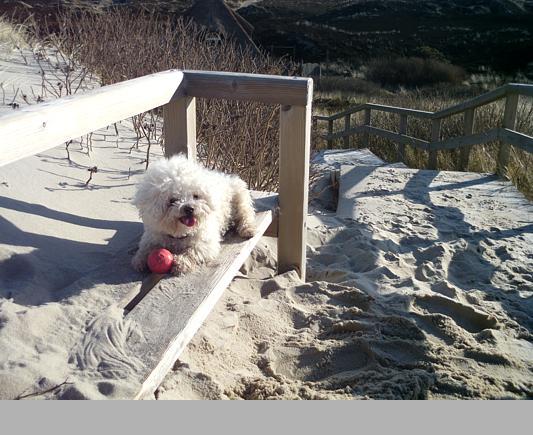Spielst du mit mir Ball?