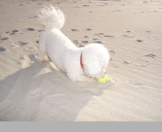 so sauber gehe ich an den Strand