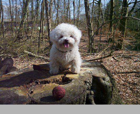 im Wald laufe ich besonders gerne!