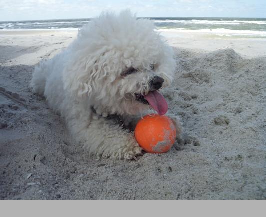 im Sommer war ich wieder am Strand.