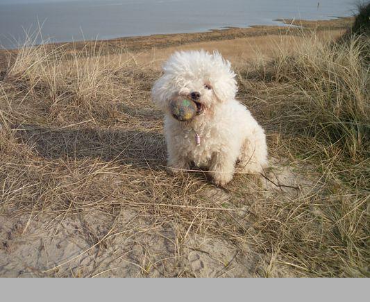 spielen in den Dünen ist toll!